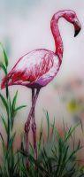 der_flamingo